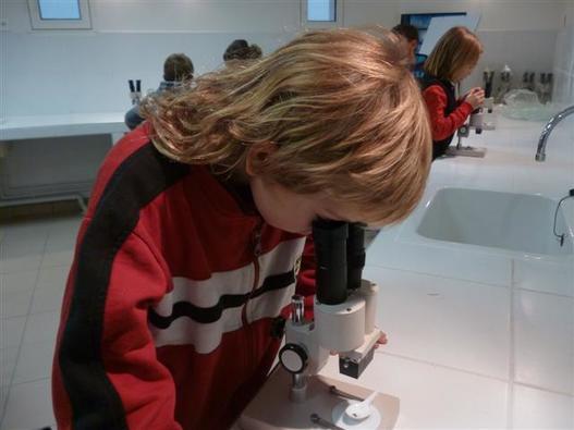 Observation à la loupe binoculaire